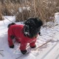 Zara LOVES the snow